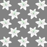 Fond de modèle de lis blanc Images stock