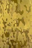 Fond de mosaïque dérivé de l'écorce d'arbre naturelle Photo stock