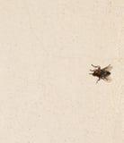 Fond de mouche Images libres de droits