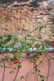 Fond de mur en pierre de fleur image libre de droits