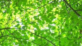 Fond de nature Éclat de Sun par le soufflement sur des feuilles de vert d'arbre de vent Bokeh abstrait brouillé avec la fusée du  clips vidéos
