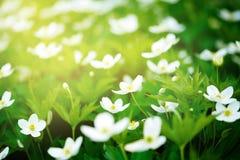 Fond de nature avec des fleurs Photographie stock