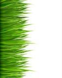 Fond de nature avec l'herbe verte. Image stock