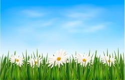 Fond de nature avec l'herbe verte et les fleurs et Photos libres de droits