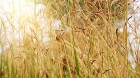 Fond de nature d'été Photographie stock