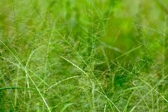 Fond de nature d'abrégé sur herbe verte Photographie stock