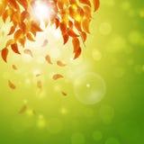 Fond de nature d'automne Photo libre de droits