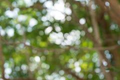 Fond de nature de Bokeh Photos libres de droits