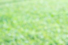 Fond de nature de couleur verte de tache floue de texture Image libre de droits