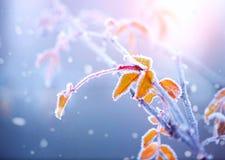 Fond de nature de l'hiver Photos libres de droits