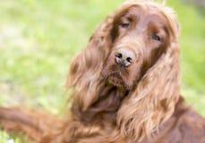 Fond de nez de chien Photo stock