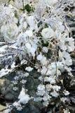 Fond de Noël avec les fleurs et le décor Image libre de droits