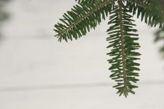 Fond de Noël léger ou de nouvelle année avec une branche d'arbre de sapin Photo libre de droits