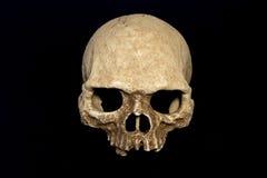 Fond de noir d'isolat de crâne de primat photographie stock libre de droits