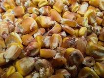 Fond de noyaux de maïs Image stock