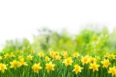 Fond de Pâques de ressort image libre de droits