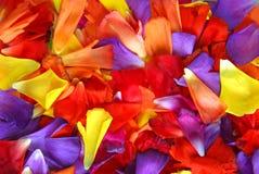 Fond de pétale de fleur photographie stock