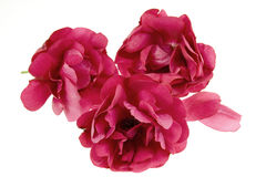 Fond de pétales de Rose images libres de droits