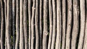 Fond de palissade de troncs d'arbre images stock