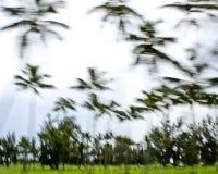 Fond de palmier Photographie stock libre de droits