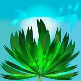 Fond de palmier Image libre de droits