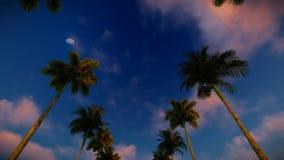 Fond de palmier illustration stock