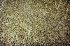 Fond de papier verdâtre grunge de texture Photos libres de droits