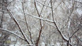 Fond de parc d'hiver Bokeh blanc de chutes de neige banque de vidéos