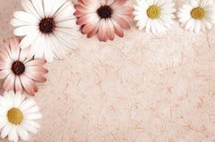 Fond de parchemin encadré avec des fleurs images libres de droits