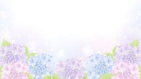 Fond de parterre d'hortensia Image libre de droits