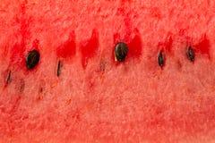 Fond de pastèque image libre de droits