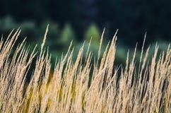 Fond de paysage d'automne Images stock