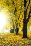 Fond de paysage d'automne Photo stock