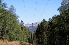 Fond de paysage de ligne électrique de forêt Photos libres de droits