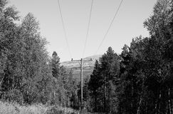 Fond de paysage de ligne électrique de forêt Photo stock