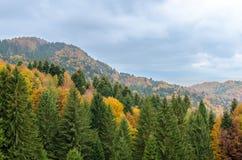 Fond de paysage de montagne d'automne Image stock
