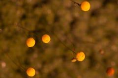 Fond de petits petits bourgeon floraux jaunes image libre de droits