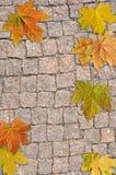 Fond de pierre et de feuille Photo stock