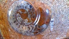 Fond de pierre gemme d'ammonite Images libres de droits