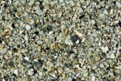 Fond de pierres et de coquilles de plage Images libres de droits