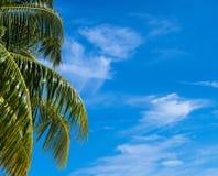 Fond de plage d'été - ciel et paume Photographie stock libre de droits