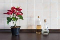 Fond de plan de travail de cuisine Usine avec la bouteille deux Photographie stock libre de droits