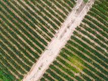Fond de plantation de pomme de pin de vue aérienne Images libres de droits