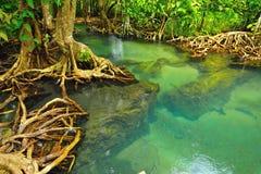 Fond de plante aquatique Images libres de droits