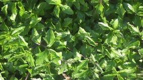 Fond de plante verte Images libres de droits