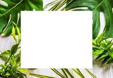 Fond de plantes tropicales Photographie stock