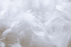Fond de plumes blanches - photos courantes Photographie stock libre de droits