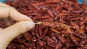 Fond de poivre de piment Photographie stock libre de droits