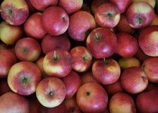 Fond de pomme rouge rassemblée image libre de droits