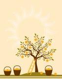 Fond de pommier Photo libre de droits